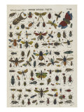 Histoire naturelle : insectes