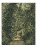 Chemin sous bois en été