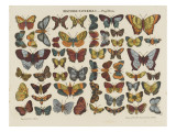 Histoire naturelle : papillons