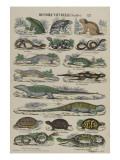 Histoire naturelle (reptiles)