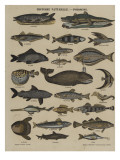 Histoire naturelle : poissons