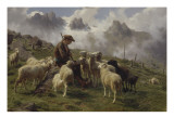 Berger des Pyr&#233;n&#233;es donnant du sel &#224; ses moutons