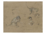 études d'après un singe