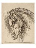Etude de tête de cheval pour Diomède dévoré par ses chevaux