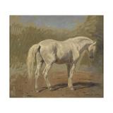 Etude de cheval blanc