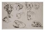 Sept études de têtes de lions  lionne ou tigre et deux études de crane de lion