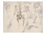 Etude de squelette