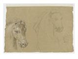Etudes pour la tête d'un cheval