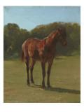 Etude de cheval bai cerise