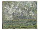 Printemps. Pruniers en fleurs, dit : Potager, arbres en fleurs, printemps, Pontoise Giclée par Camille Pissarro
