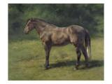 Etude de cheval gris au vert