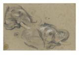 Etude de deux têtes d'éléphants tournées vers la droite  et étude d'oeil