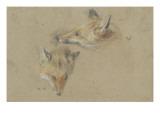Etude de deux têtes de renards