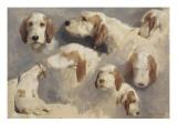 Etude de chien de chasse ; 8 esquisses