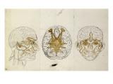 Etudes du système nerveux de la tête de l'homme