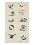Vignettes à décors floral et animalier : poissons  libellules  oiseaux  crustacés  tigre