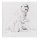 Etude de singe