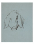 Etude de tête de cochon
