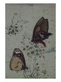 Deux papillons parmi les fleurs
