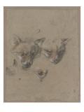 Deux têtes de renards et un oeil