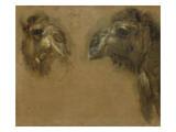Deux têtes de dromadaires