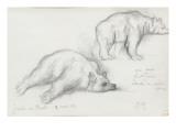Deux études d'ours