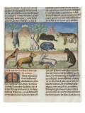Le Livre de la chasse de Gaston Phébus : le mastiff ou mâtin  chien de garde