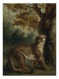 Le Puma  dit aussi Lionne guettant une proie