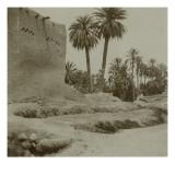 Voyage en Algérie : vue d'une palmeraie