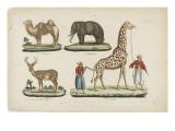 Le chameau  l'éléphant  le daim  la girafe