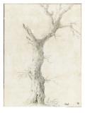 Tronc d'arbre dépouillé
