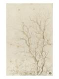 Deux branches d'arbres nues émérgeant d'un feuillage