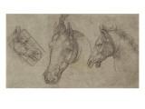 Trois têtes de chevaux