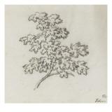 Branche d'arbre avec des feuilles