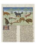 Le Livre de la chasse de Gaston Phébus : le chien d'oysel  chien d'arrêt