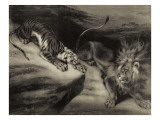 L'attaque du tigre