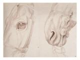 Deux études partielles d'une tête de cheval bridée