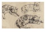 Trois études de chats allongés  la tête vers la droite