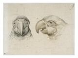 Deux ts de perroquets