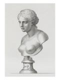 Tableau du Cabinet du Roi  statues et bustes antiques des Maisons Royales Tome II : planche 16