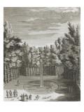 """Recueil des """"Plans  Profils et Elévations du Château de Versailles"""" : planche 46 (1) : vue du"""