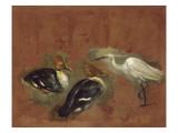 Deux canards et une aigrette garzette