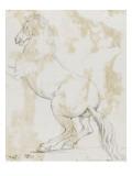 Album : cheval hennissant ; cheval cabré ; cheval allongé ; crâne de cheval
