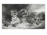 Jeune tigre jouant avec sa m&#232;re  lithographie 1er &#233;tat