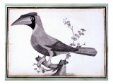 Original Drawings of Ornithology