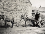 China  Horses Harnessed  in Peking