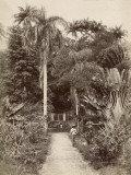 West Indies  Botanical Garden of St Pierre  in the Martinique