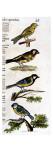 Original Drawings of Ornithology