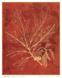 Golden Oak I