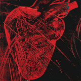 Human Heart  c1979 (red with veins)